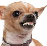 dog shows teeth