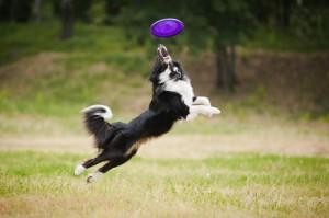 Disc-Dog