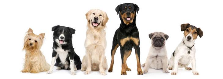 Group Classes - Dog Training