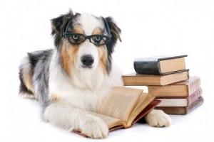DogStudying