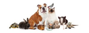 collection-domestic-pets-together-row-popular-over-white-64645189