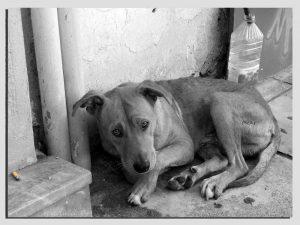 sad dog shock collar